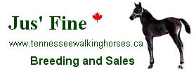 Jus' Fine Tennessee Walking Horses -  Alberta breeding farm. Foals and yearlings for sale. Registered Tennessee Walking Horse stallion, My Touch of Pride, at stud. Members of TWHBEA and CRTWH.